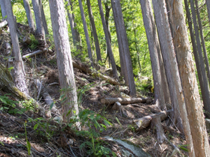 主な森林事業