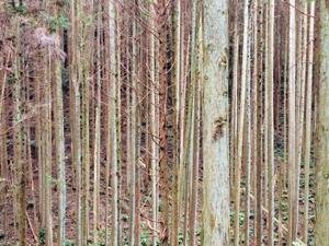 鹿児島における林業事業