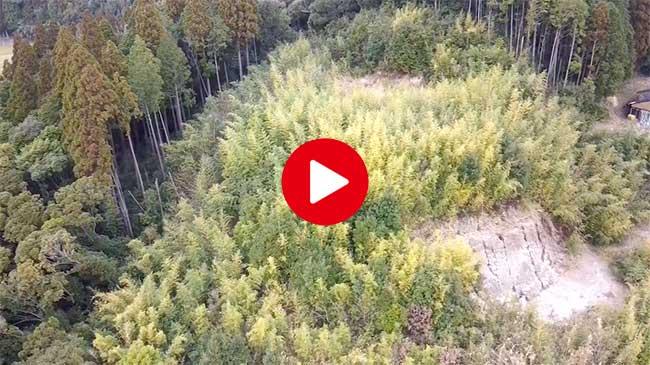 山林の木を切ります!
